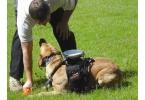 Дистанционное управление для... собаки!