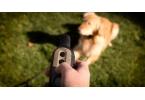 Garmin представила электронные ошейники для дрессировки собак