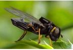 Мини-роботы будут летать и опылять растения