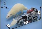Роботизированная мышь пугает настоящих