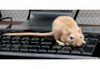 Робокрыса - прорыв в науке