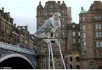 Robop соколы отпугивает голубей