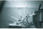 Изучено управление хвостом у ящериц, роботов и динозавров