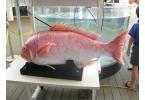 Самый реалистичный робот-рыба в мире