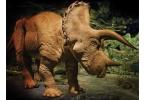 Сетевой каталог предложил покупателям трицератопса