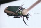 Учёные получили энергию от тел жуков-киборгов